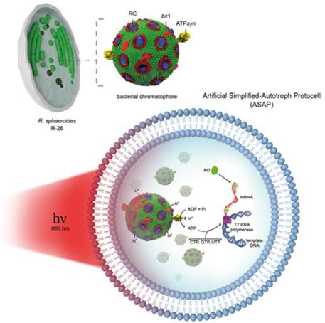 da cellule a energia chimica