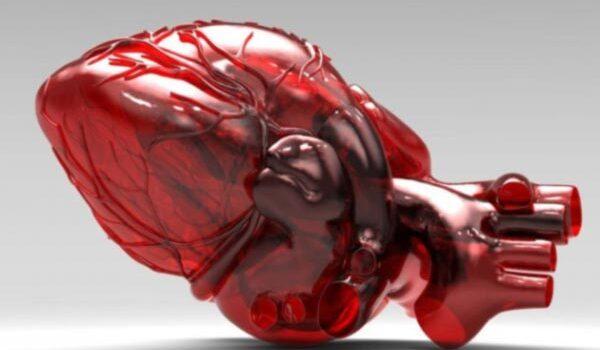 prototipo stampa 3D cuore